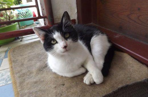 Predám Darujem odrastené mačiatka v Topoľčanoch  01b0eb267f5